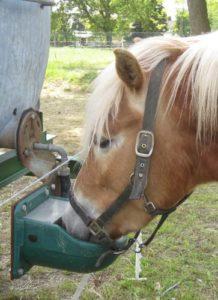 Futter Pferd
